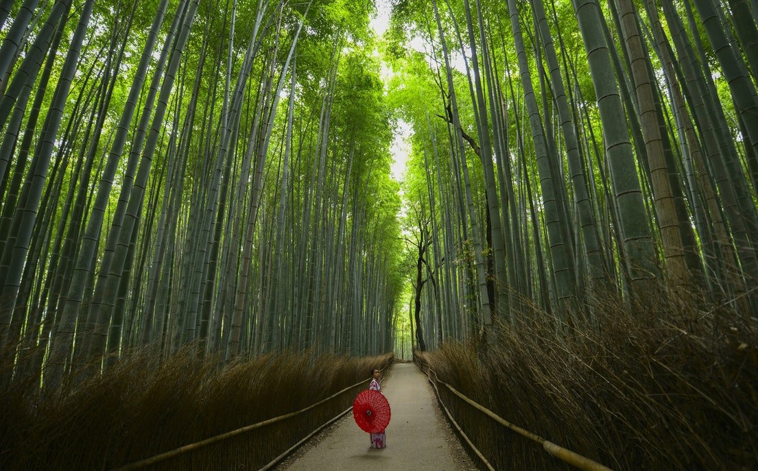 Memoirs Of Kyoto (Part II)